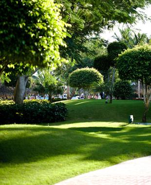 Execu-Lawn image 1