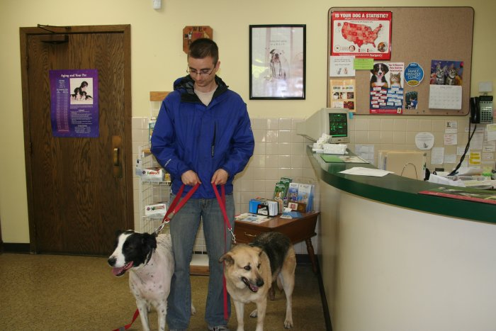 VCA Joliet Animal Hospital image 6
