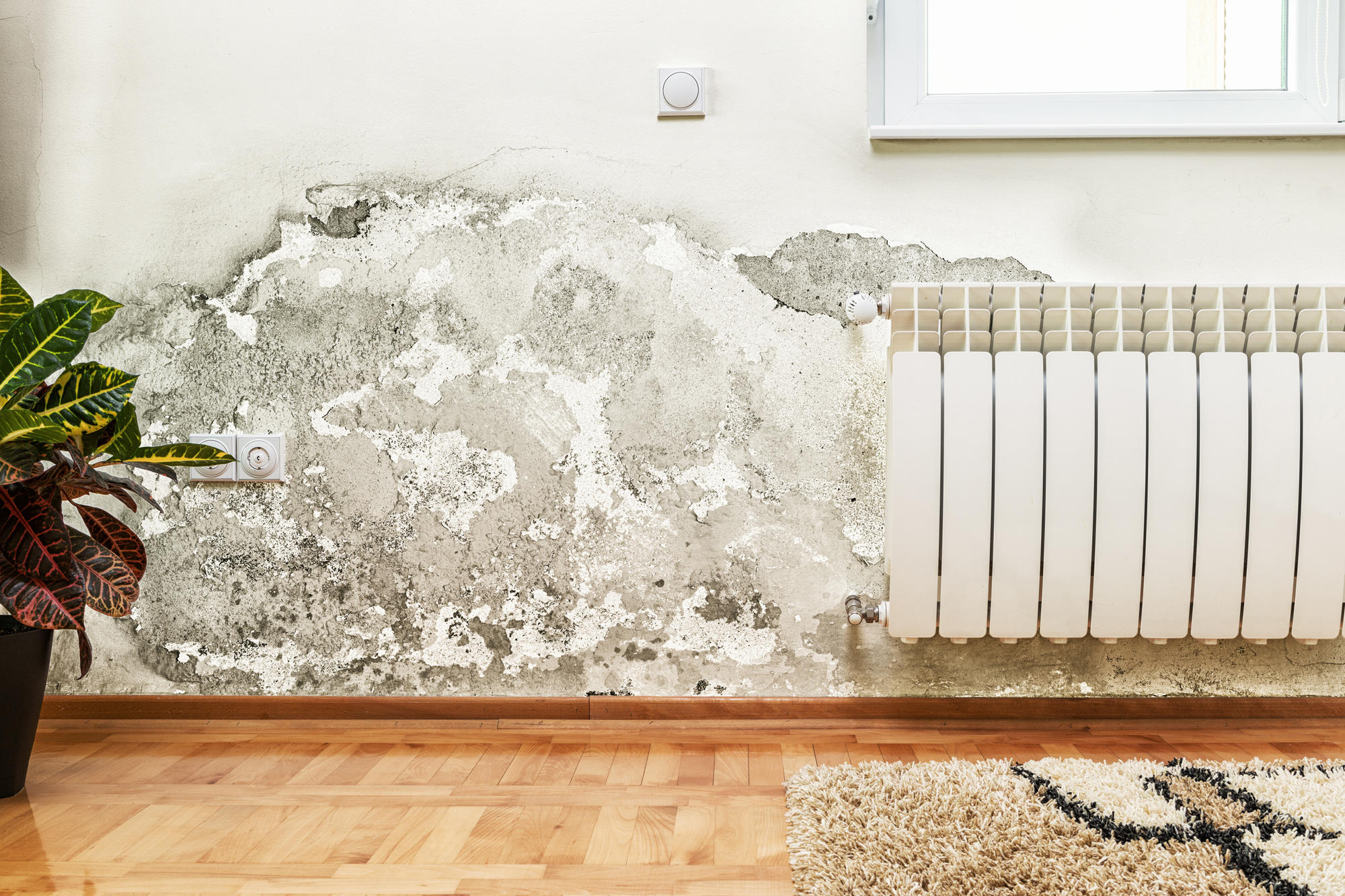 South Florida Water and Mold Restoration image 2
