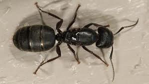 D & T Pest and Termite Control, Inc. image 11