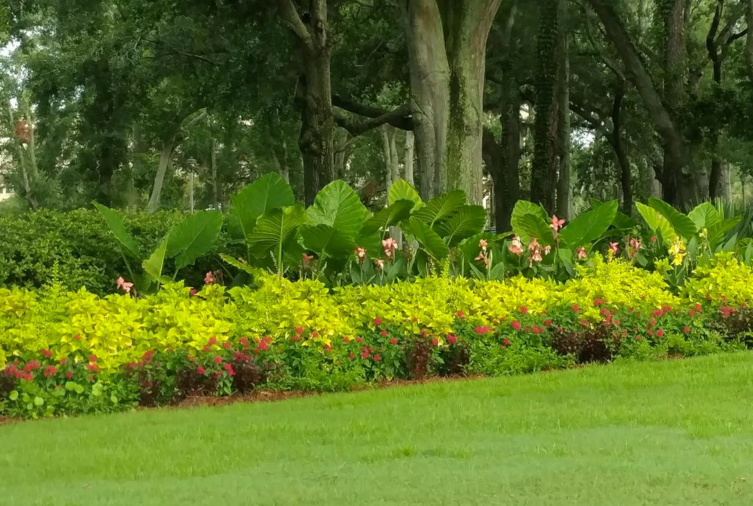 Lowcountry Greenscapes, LLC image 2
