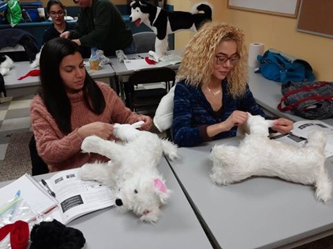 Midwest Pet CPR and First Aid image 5