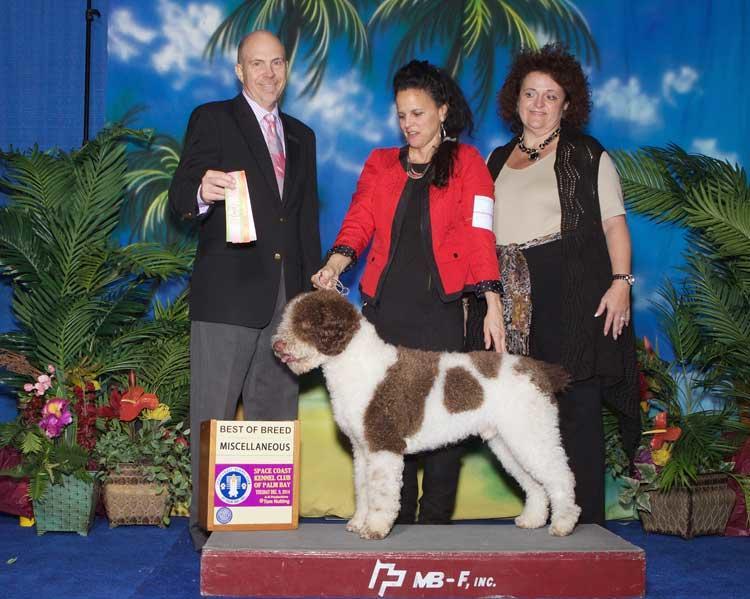 Dog Gone Sensational image 4