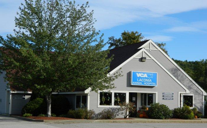 VCA Laconia Animal Hospital image 7