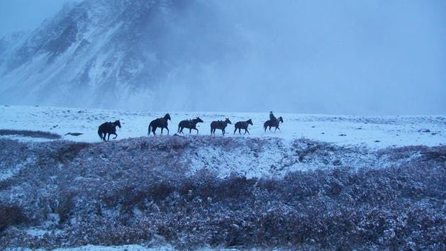 Alaska Horse Adventures, LLC image 2
