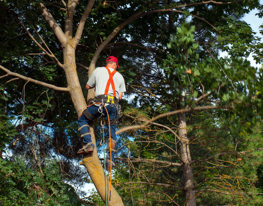Affordable Tree Service image 5