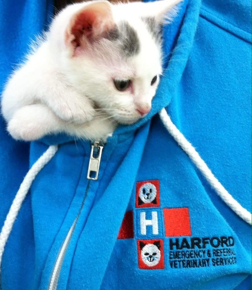 Harford Emergency & Referral Veterinary Services image 5