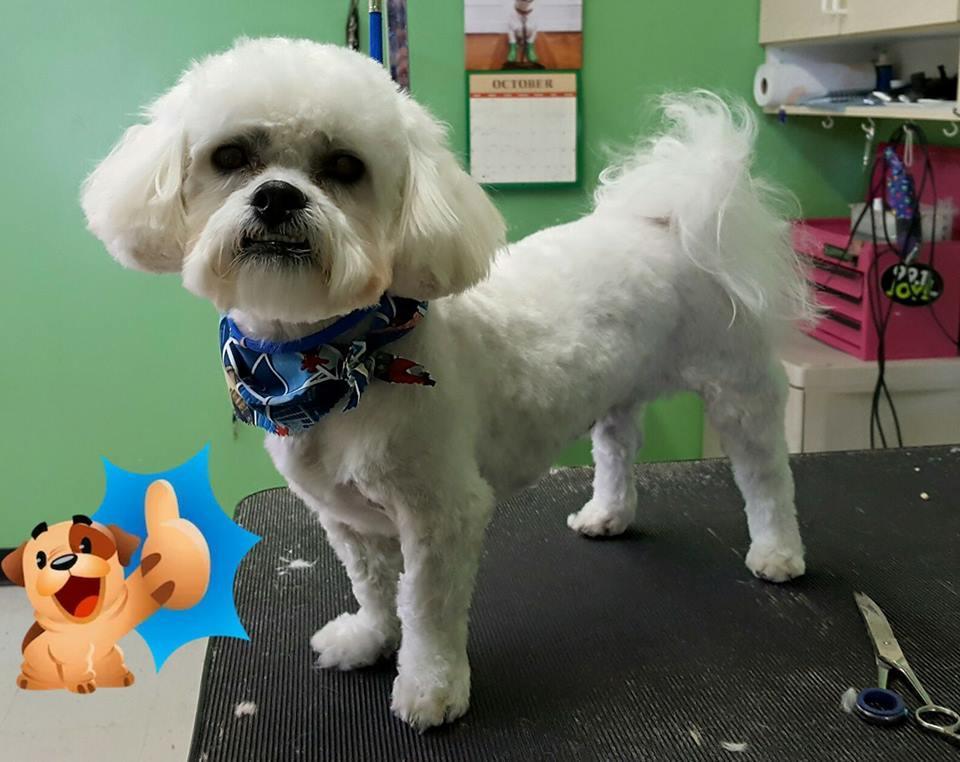 Bandanas & Bows Dog Grooming image 9