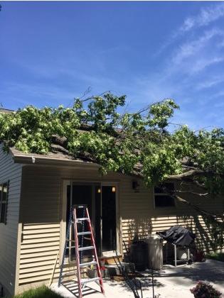 Buresh Tree Service image 0
