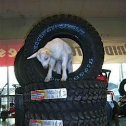 Covington Tire Pros image 4