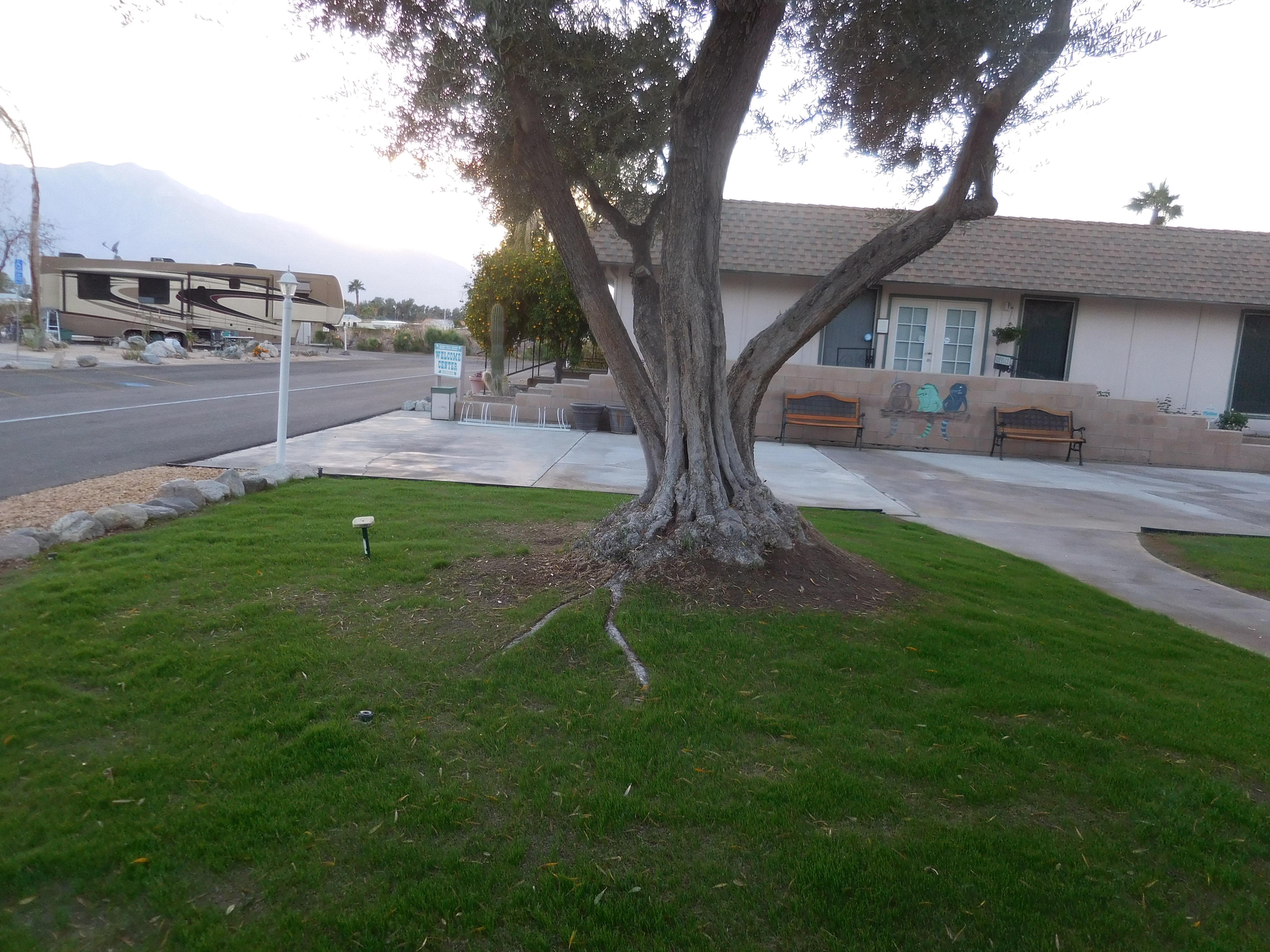 Palm Springs / Joshua Tree KOA image 10