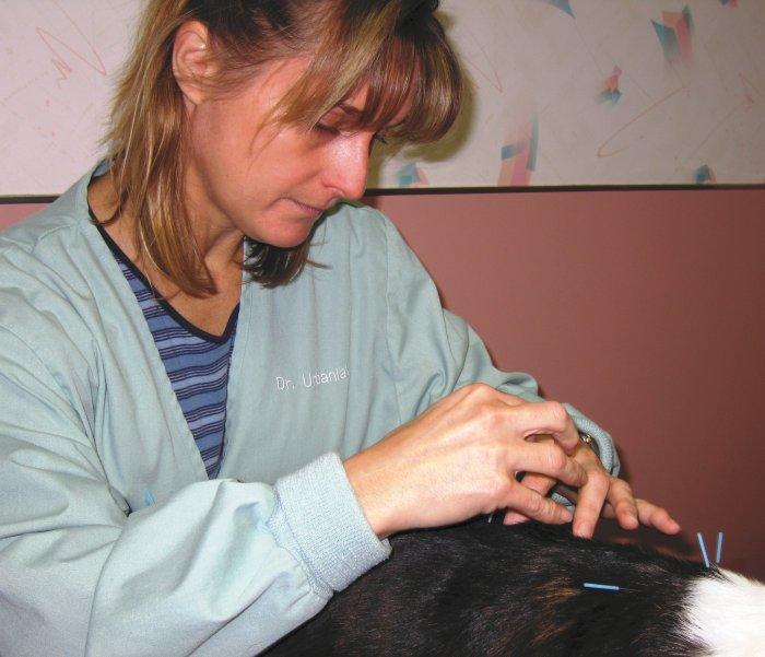 VCA Delaware Valley Animal Hospital image 7