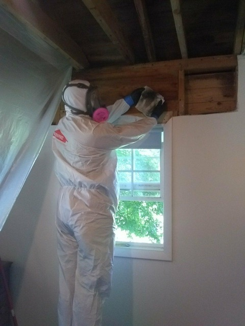Mold remediation in action with our SERVPRO of Asheville East team!