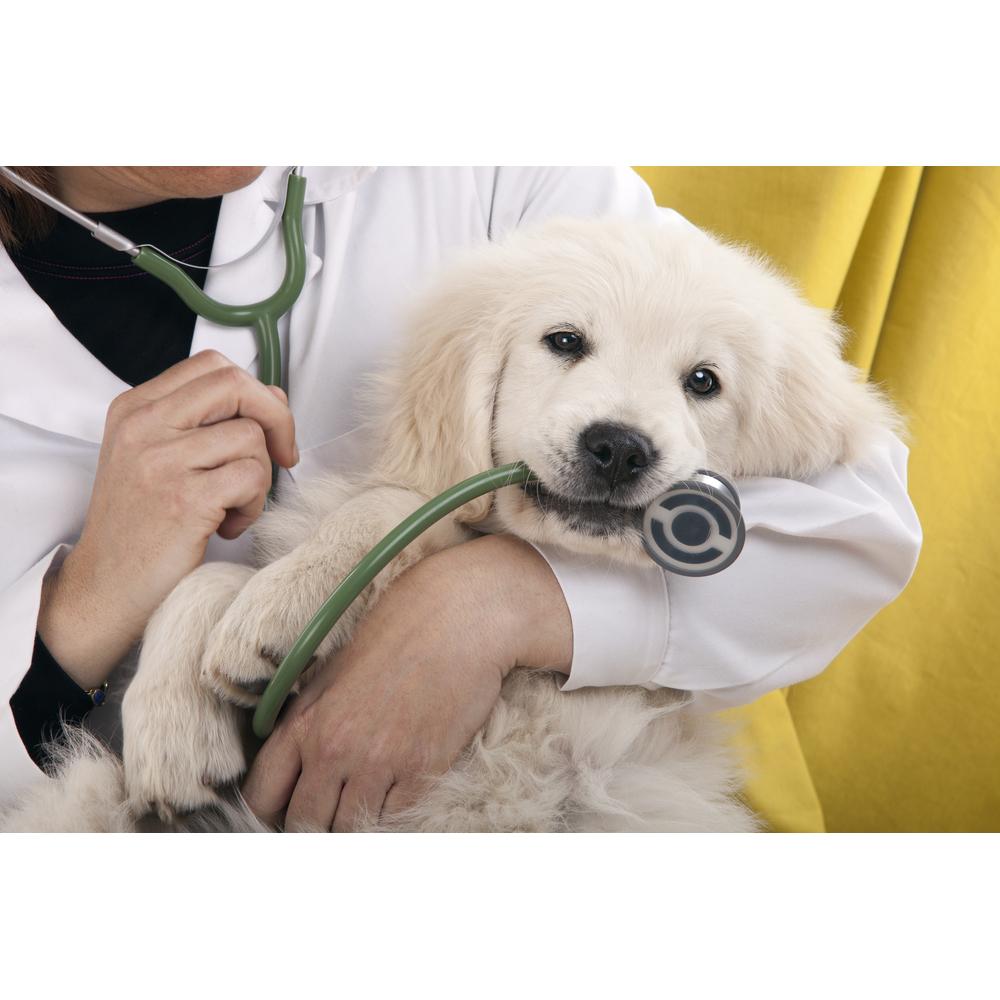 Stone Ridge Veterinary 12310 Woodcreek Drive Suite A ...