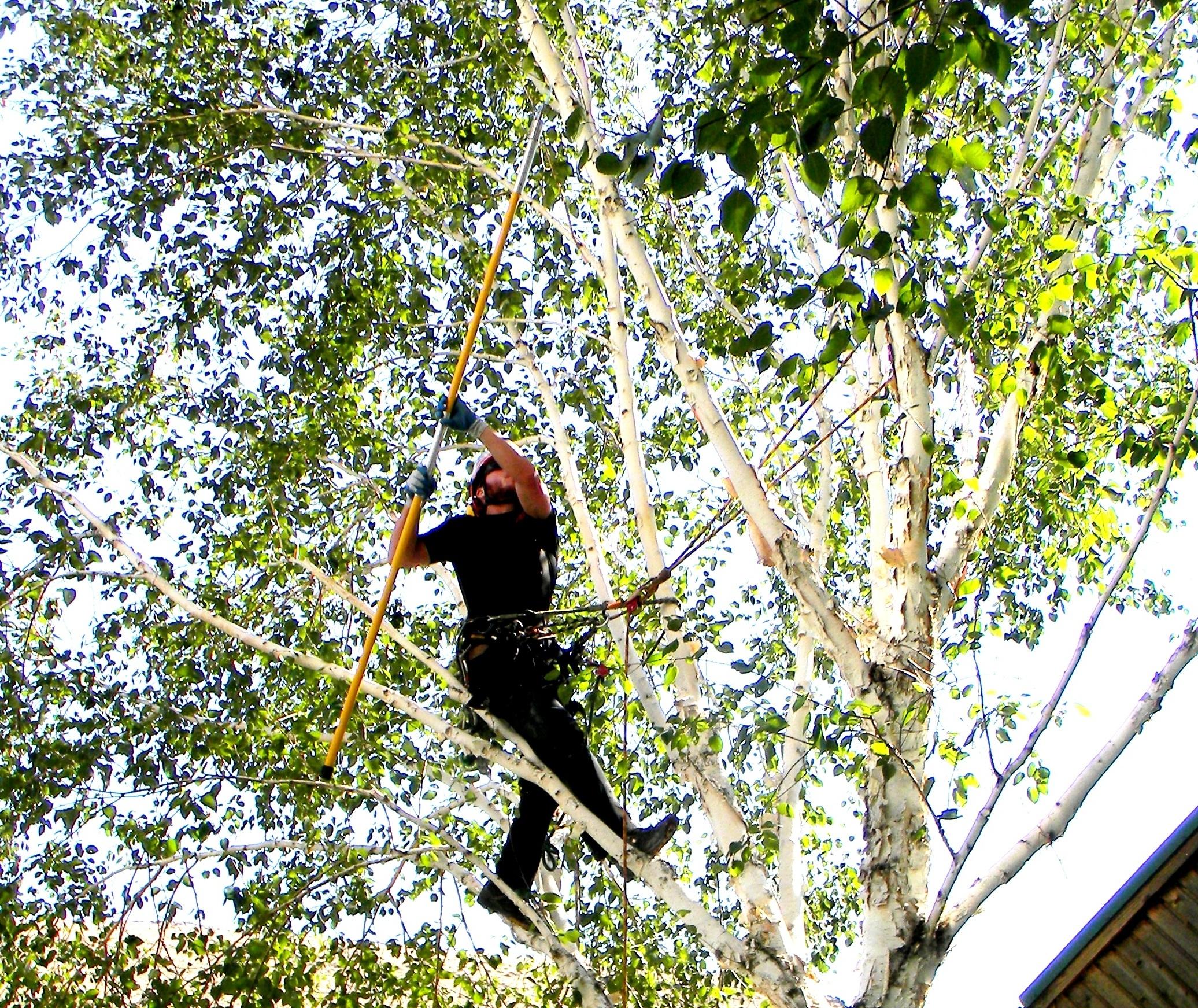 Gorge Tree Surgeon image 0