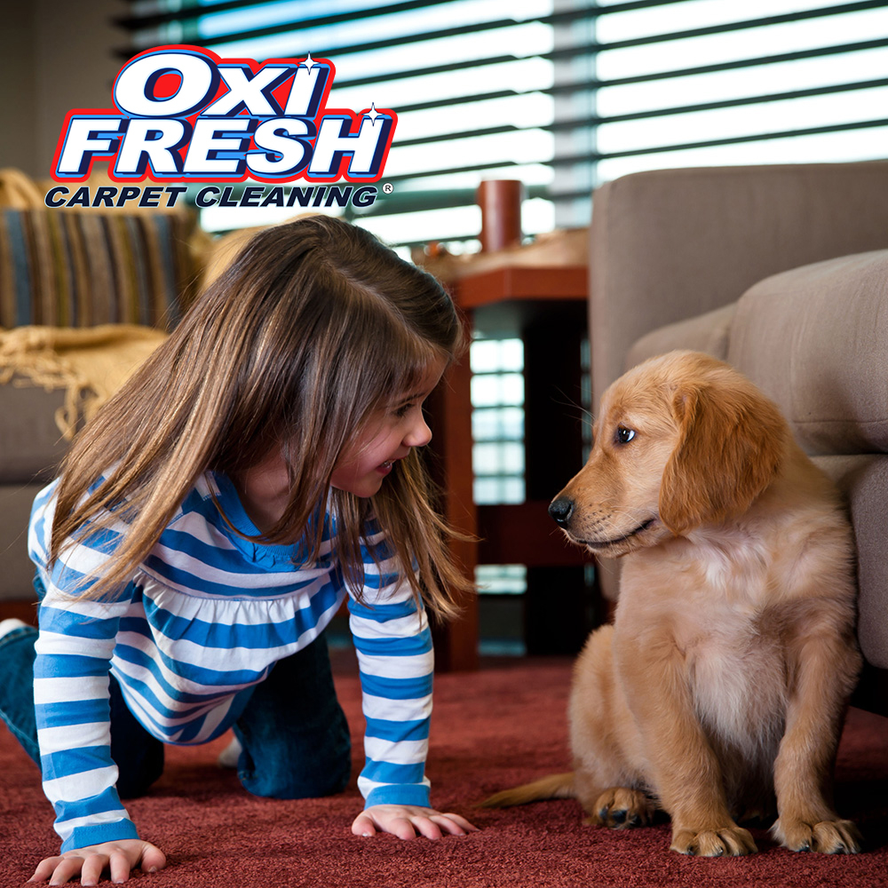 Oxi Fresh Carpet Cleaning image 0