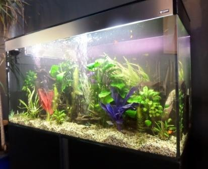 Office Aquariums Pet Shops And Supplies in Glasgow G31 2PX 192com