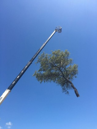 Thornton's Tree Service