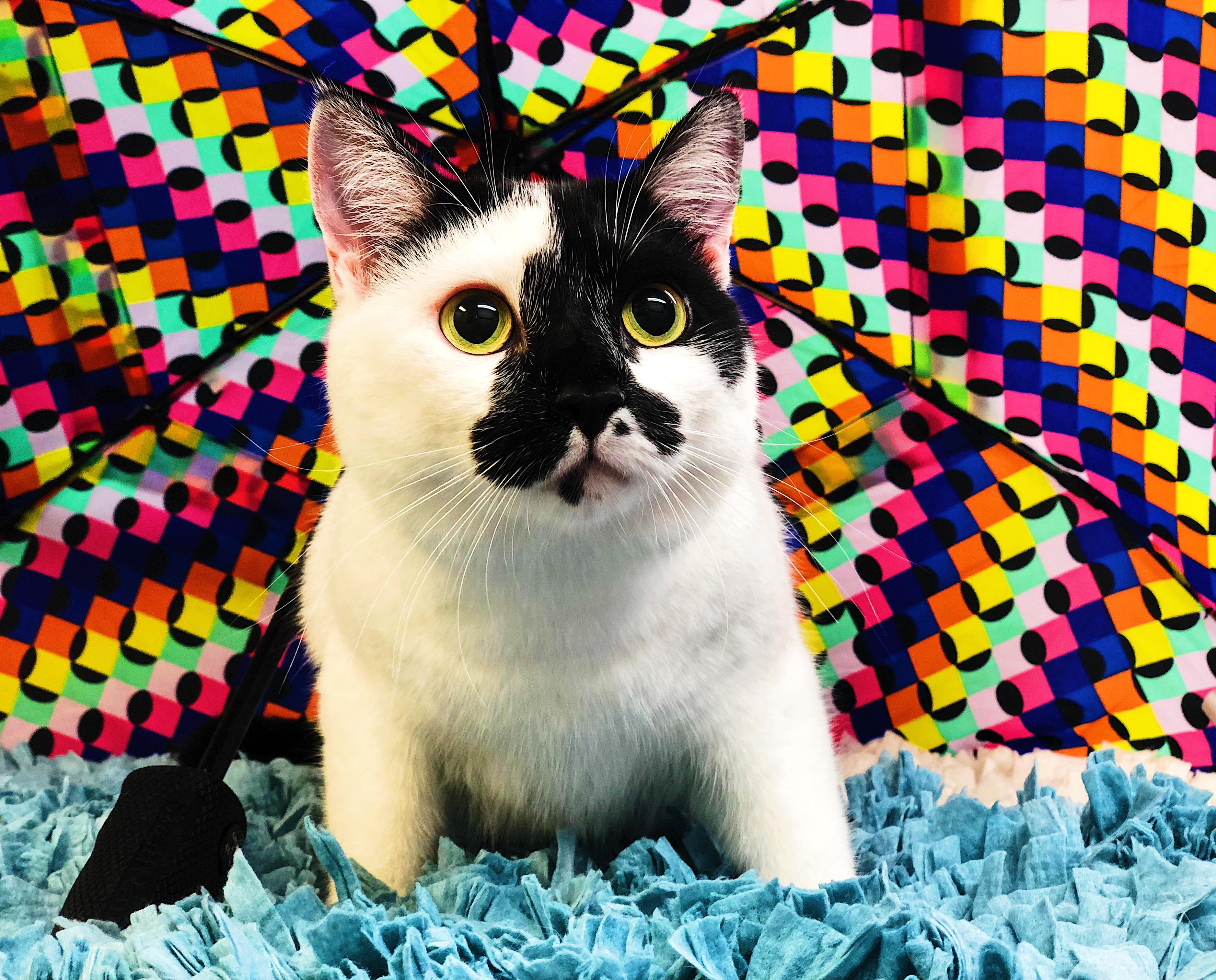 Lowcountry Feline Spa image 1