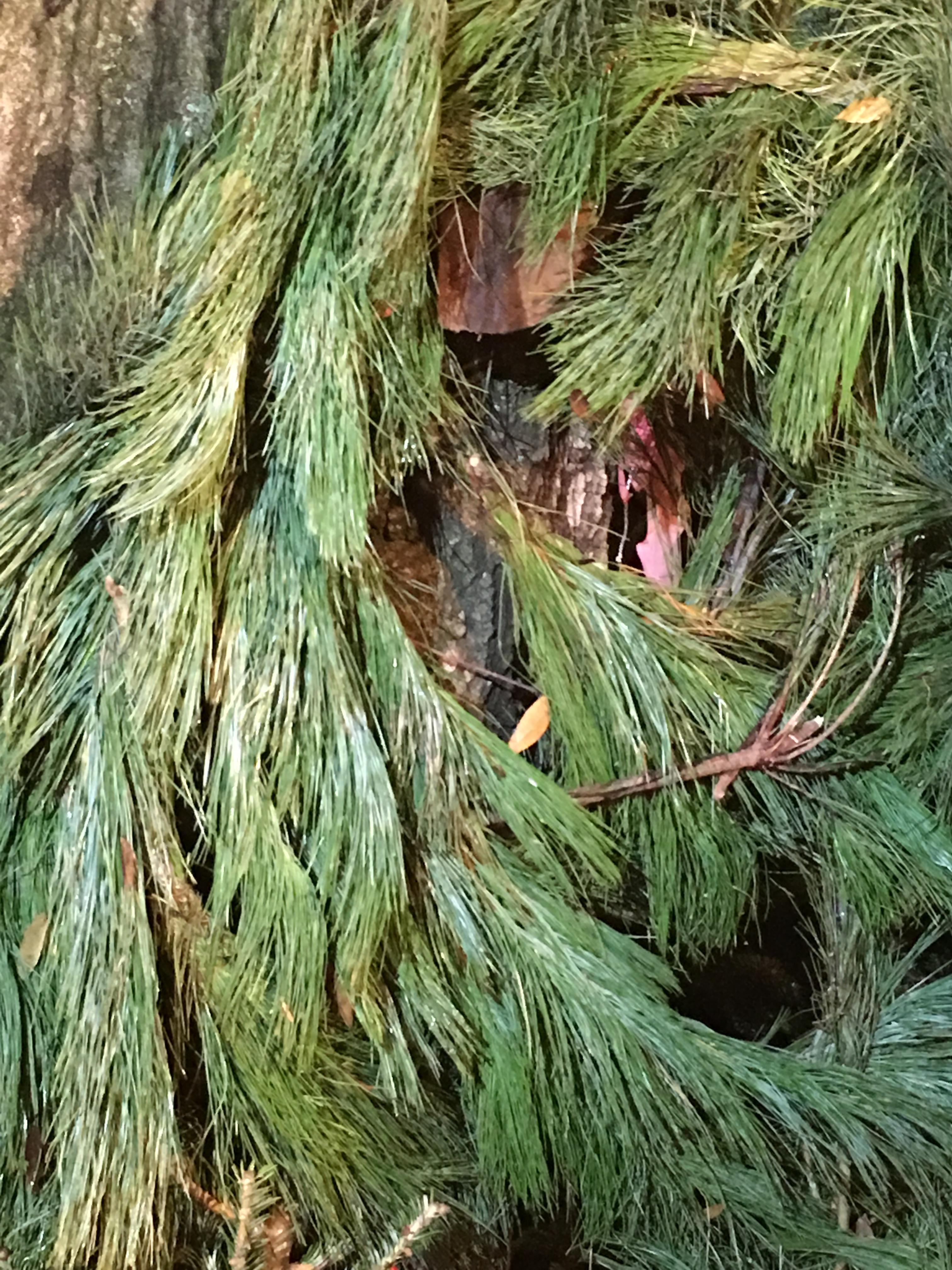 Dave's Christmas Tree Lot image 66