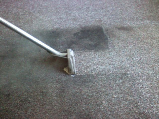 Discount Steamer Carpet & Upholstery Cleaning image 5