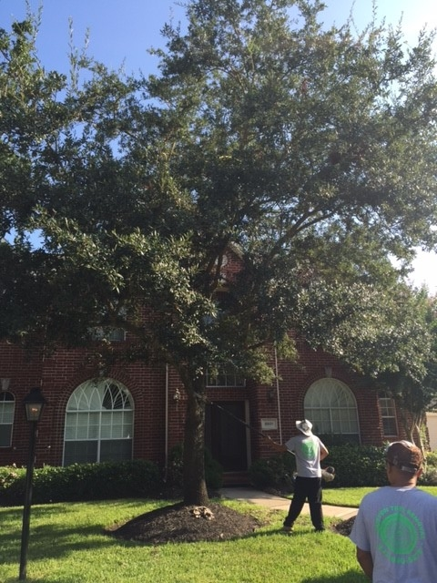 Houston Tree Removal Service image 6