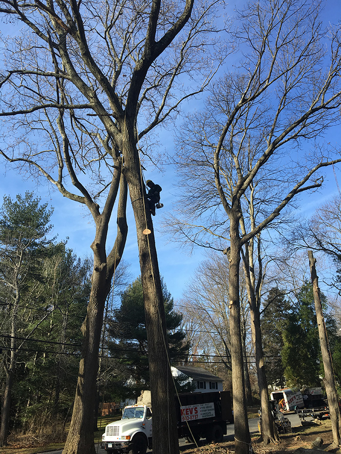 Kev's Landscaping & Tree Service image 5