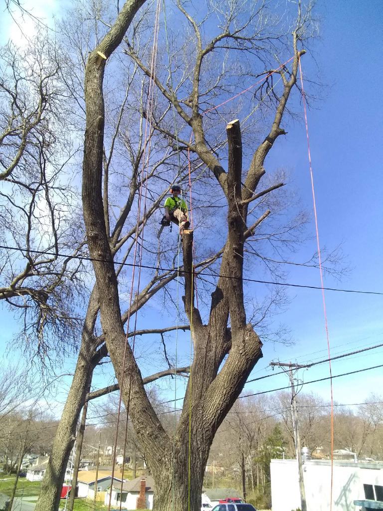 Richter's Tree Service LLC image 5