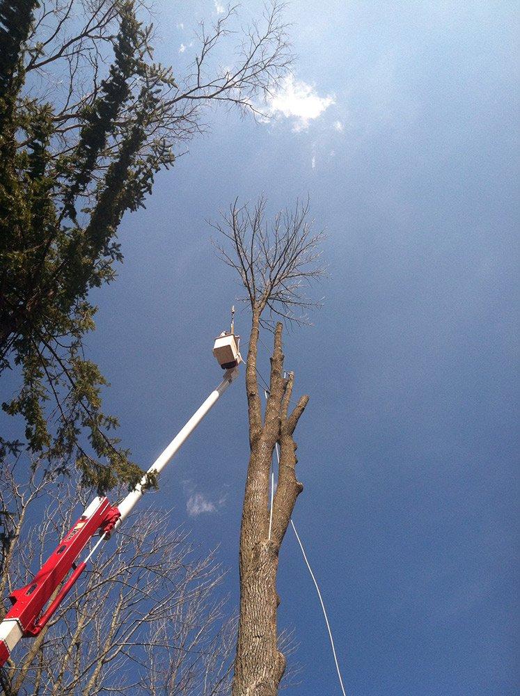White Hills Tree Removal LLC image 5