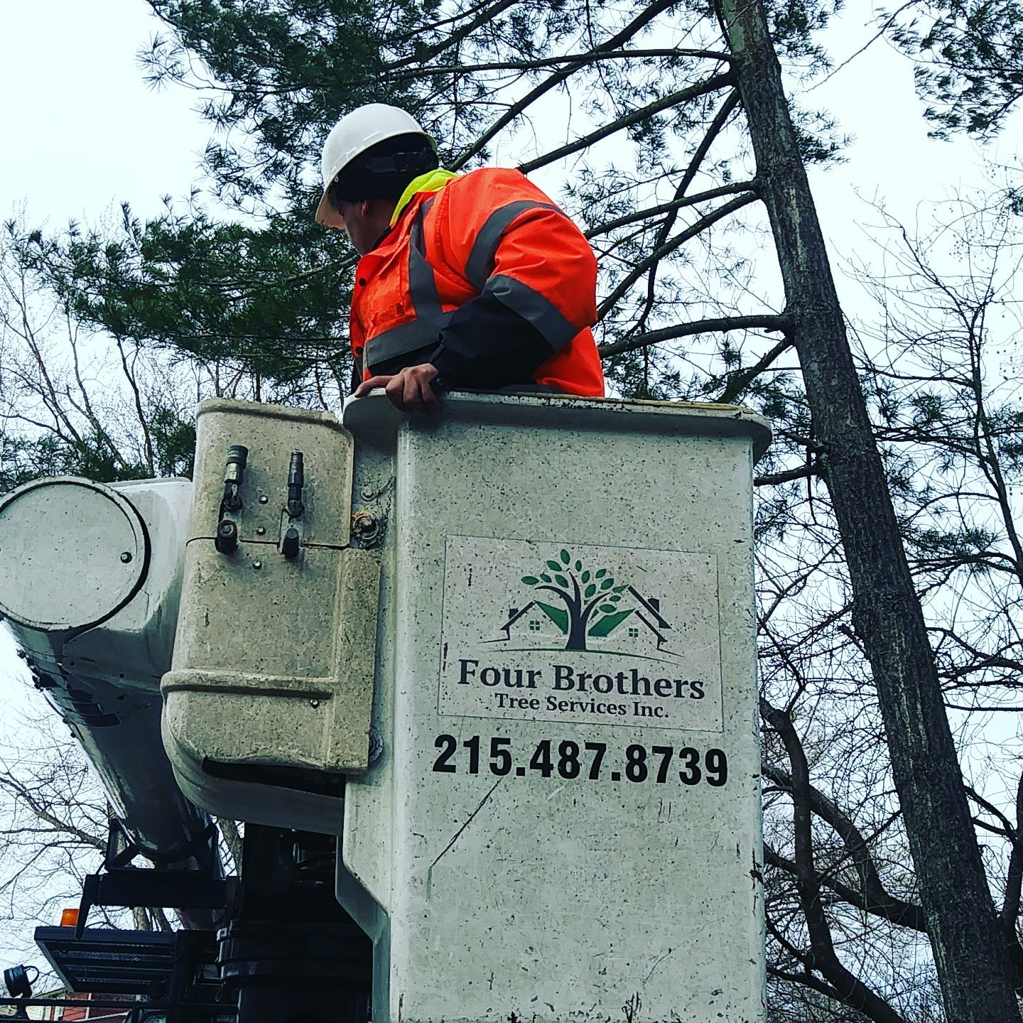 Four Brothers Tree Service Inc. image 0