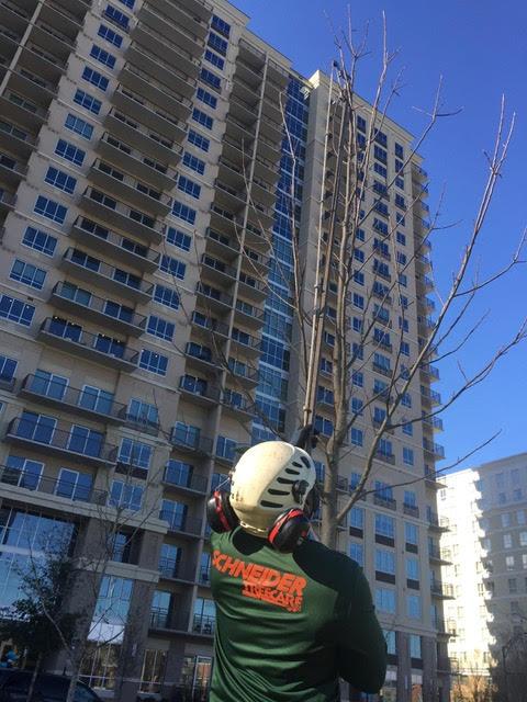 Schneider Tree Care image 2