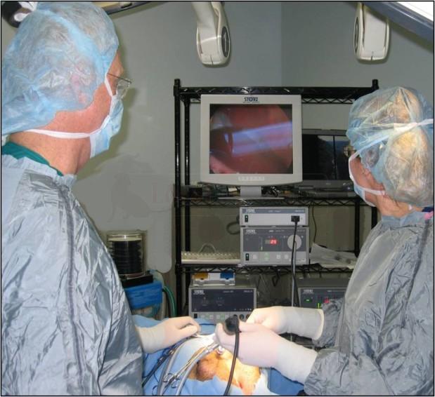 DocSide Veterinary image 4