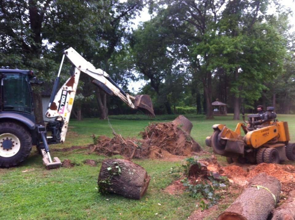 Toms River Tree Service image 5