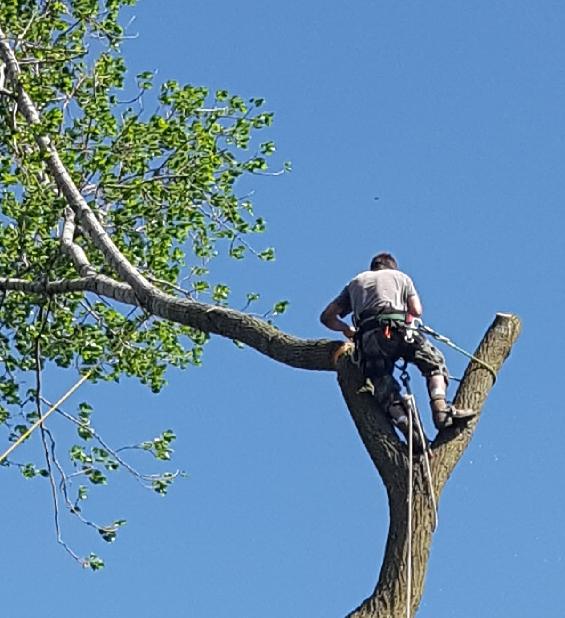 Coffman's Tree Service image 24