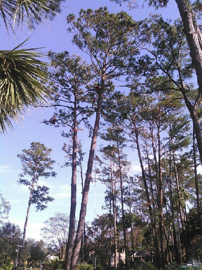Tim Kilpatrick Tree Service image 4