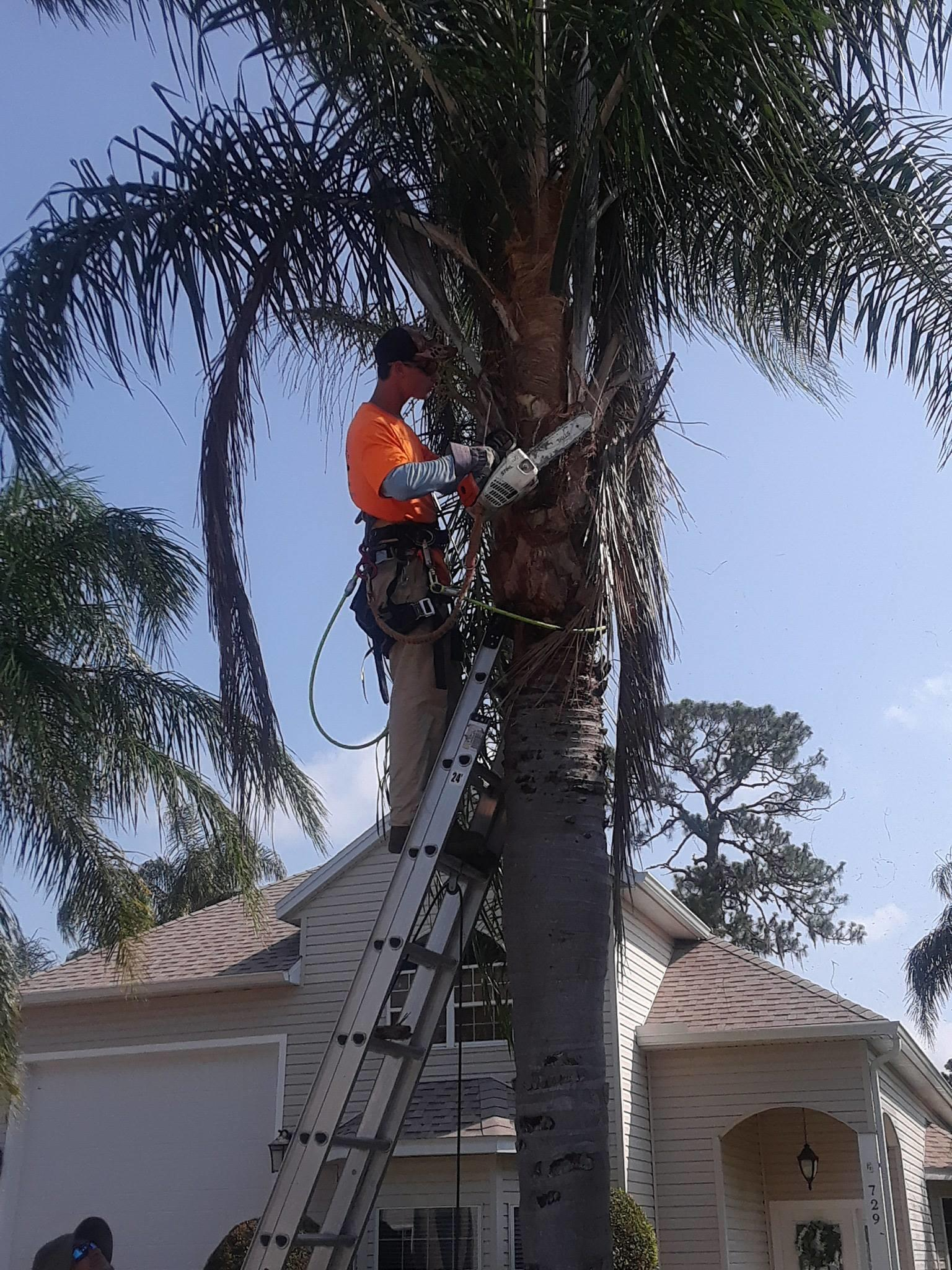 Climbin For Christ Tree Services and Bee Removal image 2