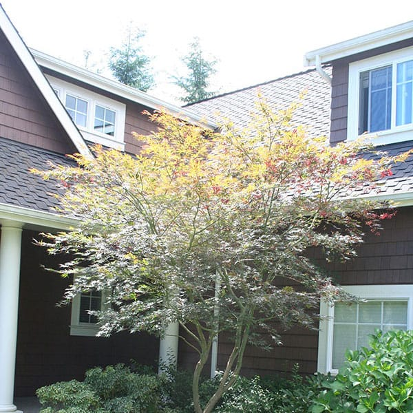 Archon Tree Services, Inc. image 20