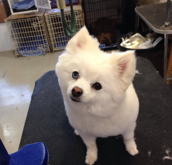 Scot's Dog Grooming