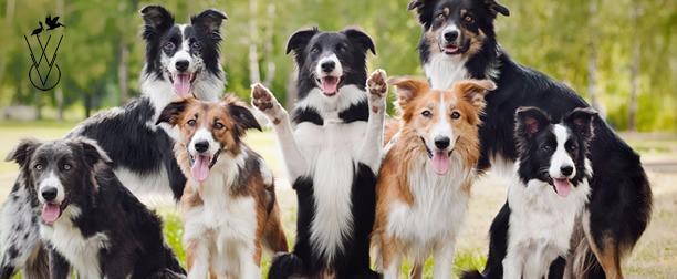 Whittington Veterinary Clinic image 2