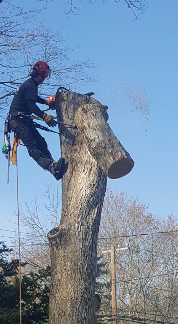 Affordable Tree Experts LLC image 2