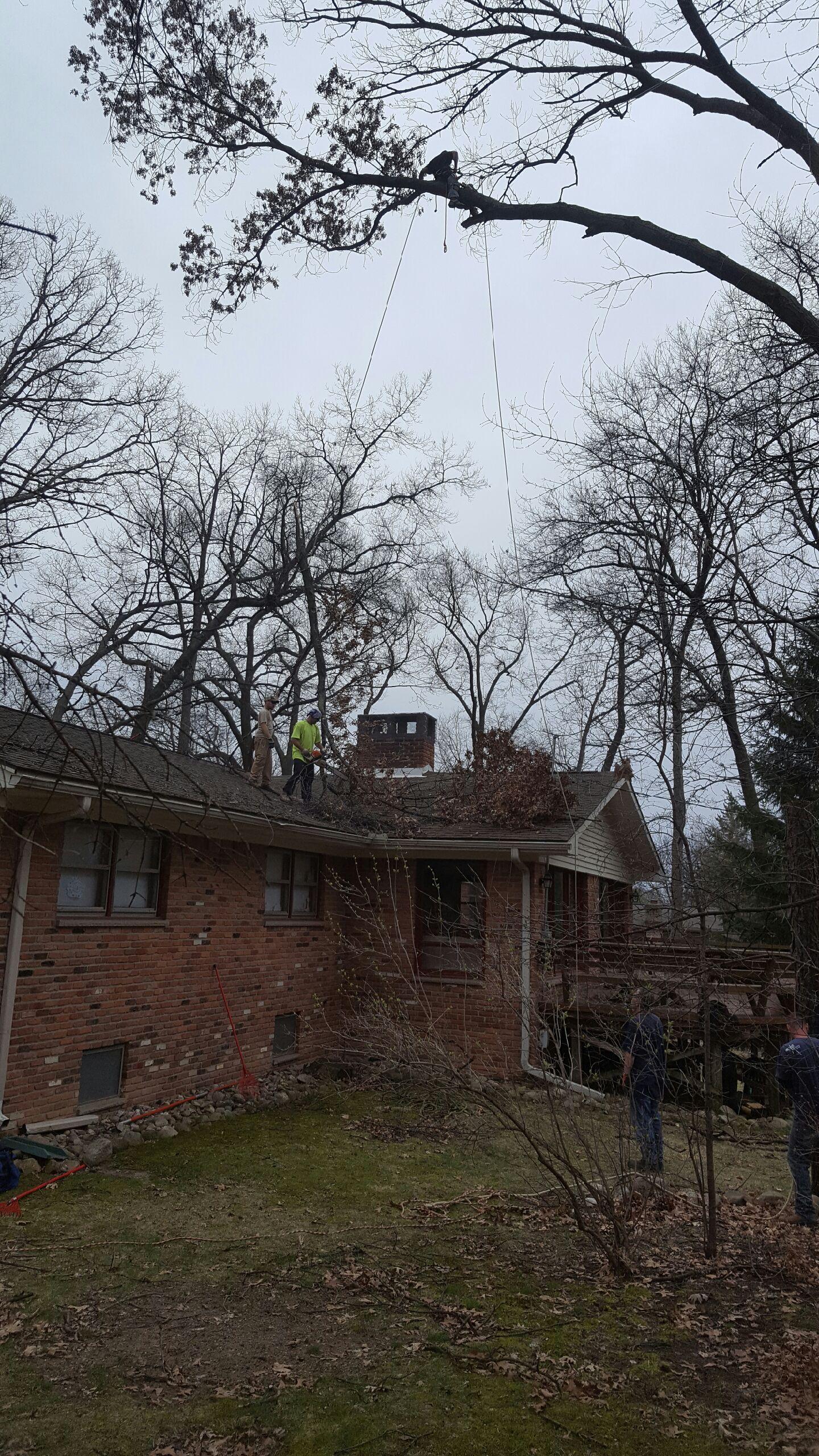 Coffman's Tree Service image 11