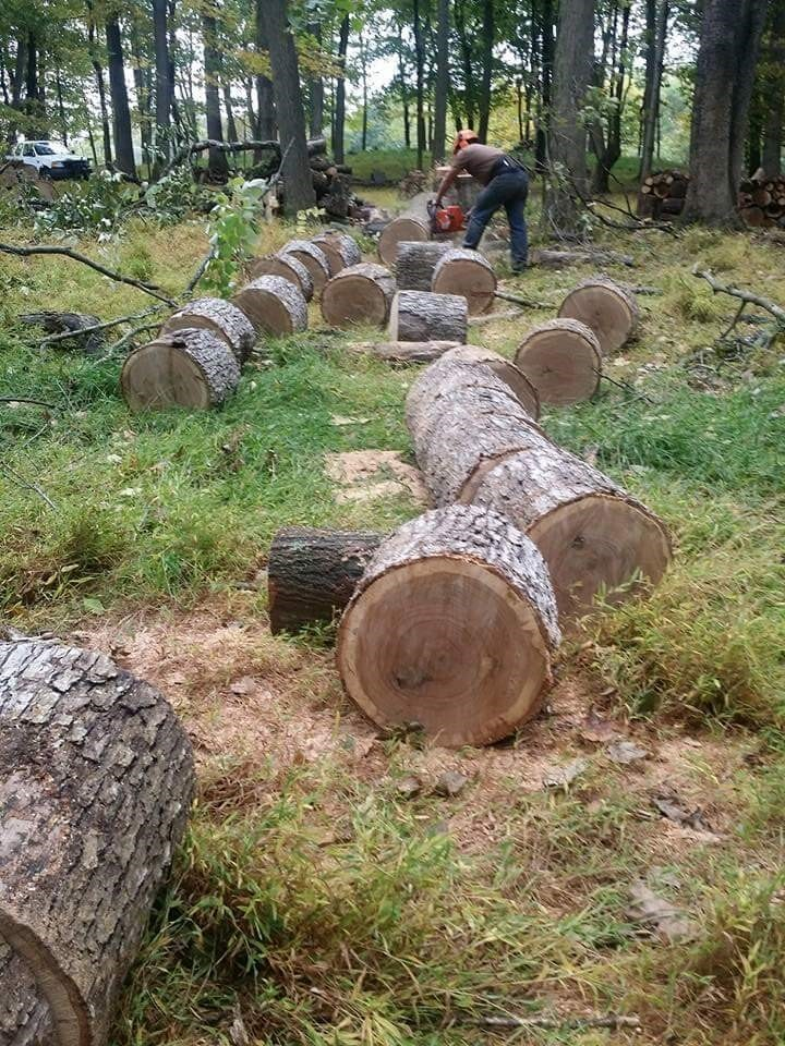 LG Landscaping and Tree Service