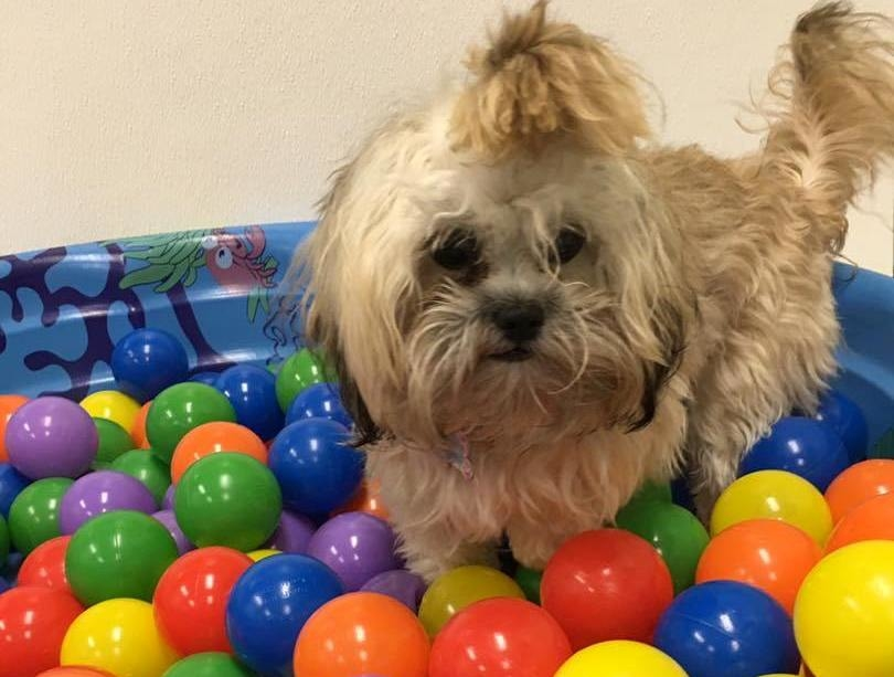 Jagger's Doggie Daycare, Dog Grooming, Training & Boarding image 8