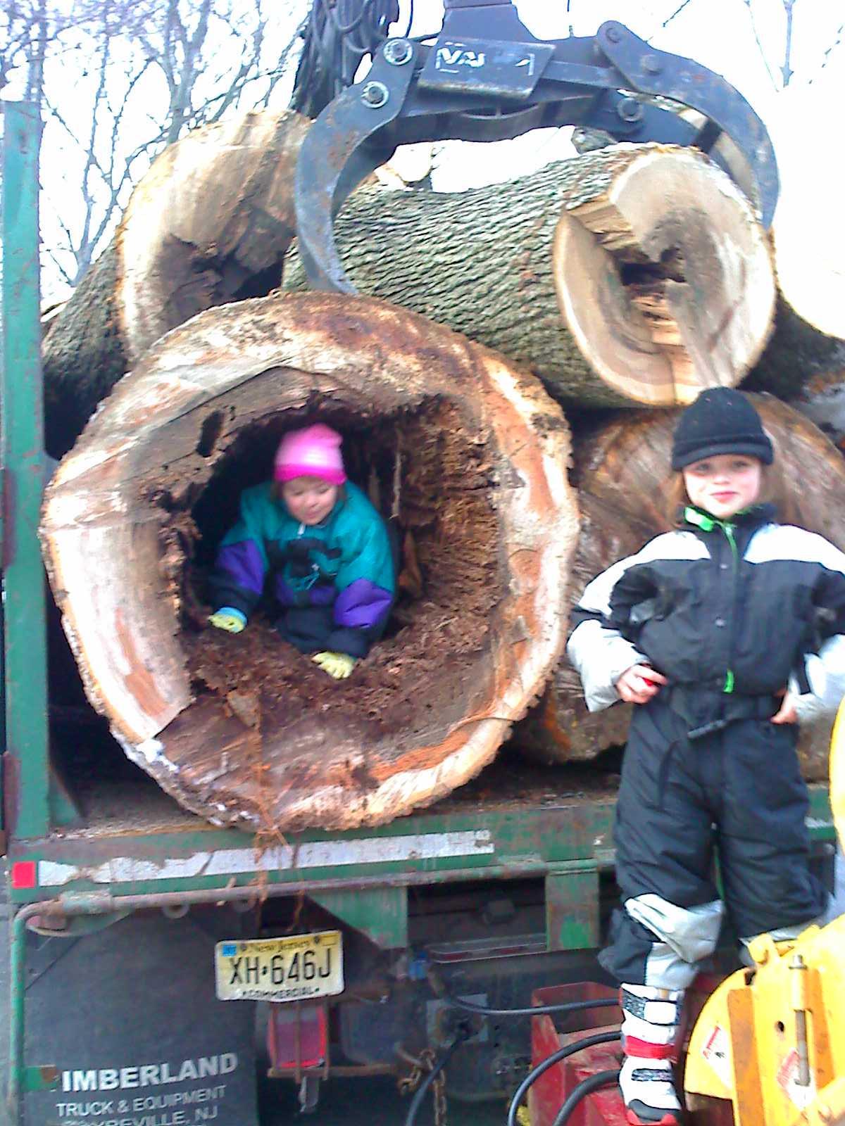 Miklos Tree Service