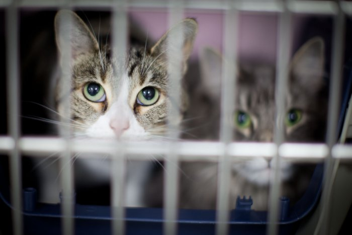 VCA Bellevue Veterinary Hospital image 1