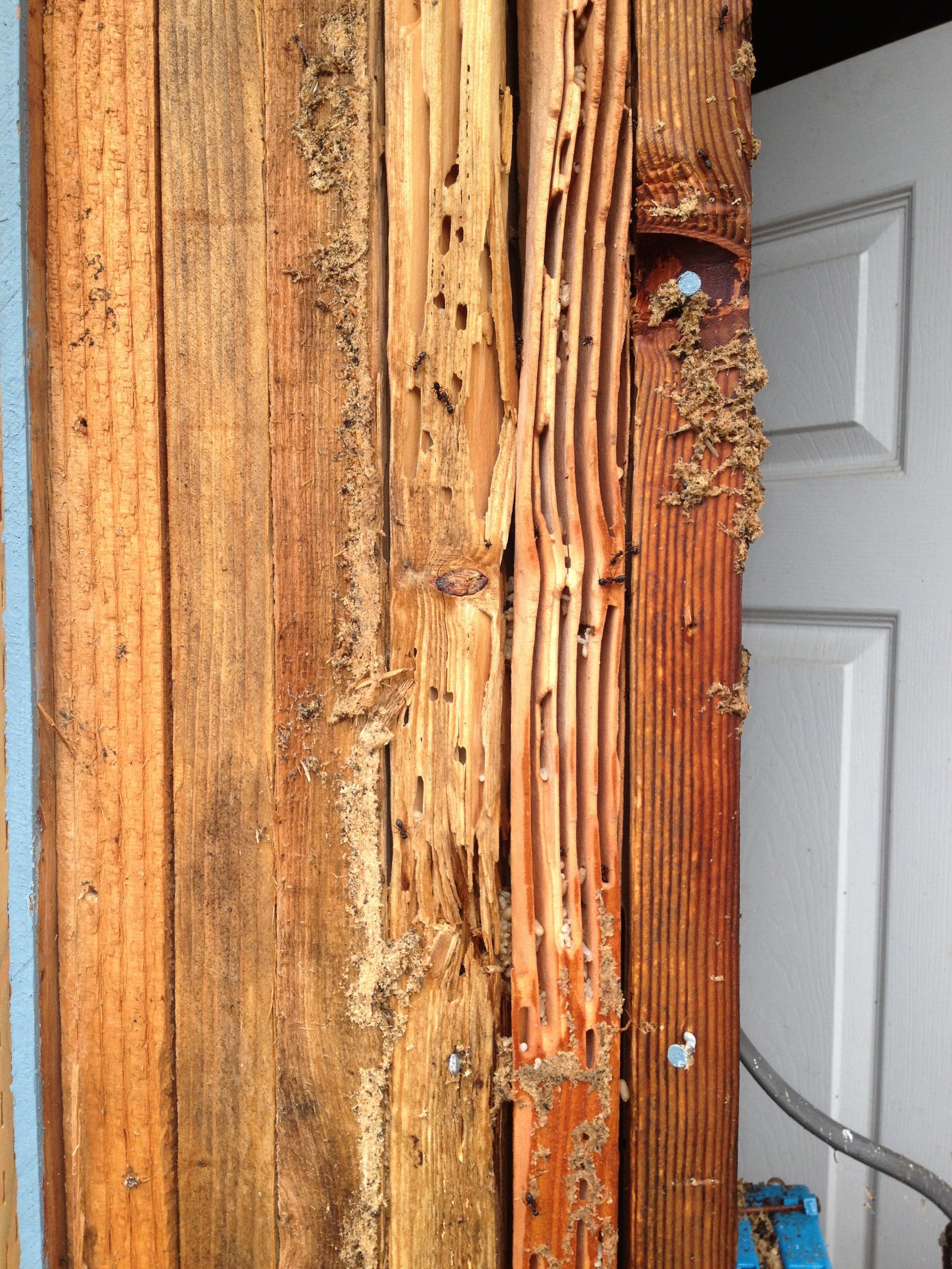 Easton Pest Management