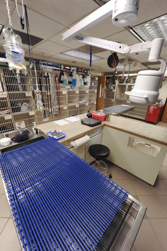 VCA Alexandria Animal Hospital image 5