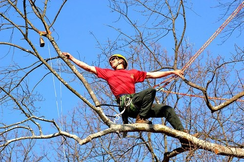 Toms River Tree Service image 0
