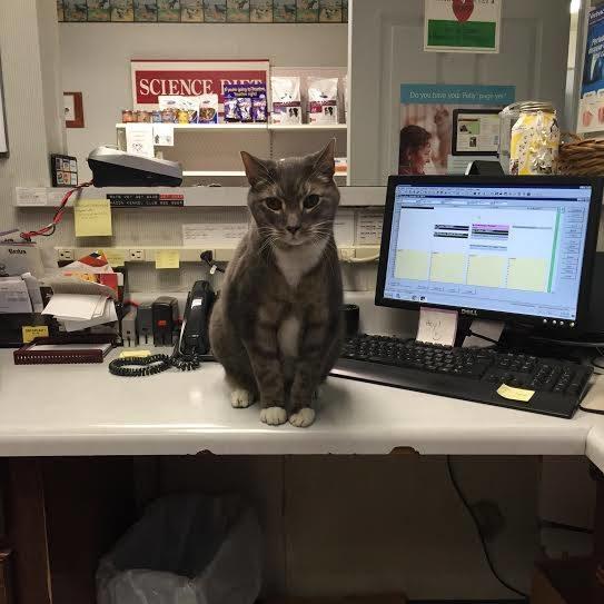 Houston Veterinary Clinic image 11