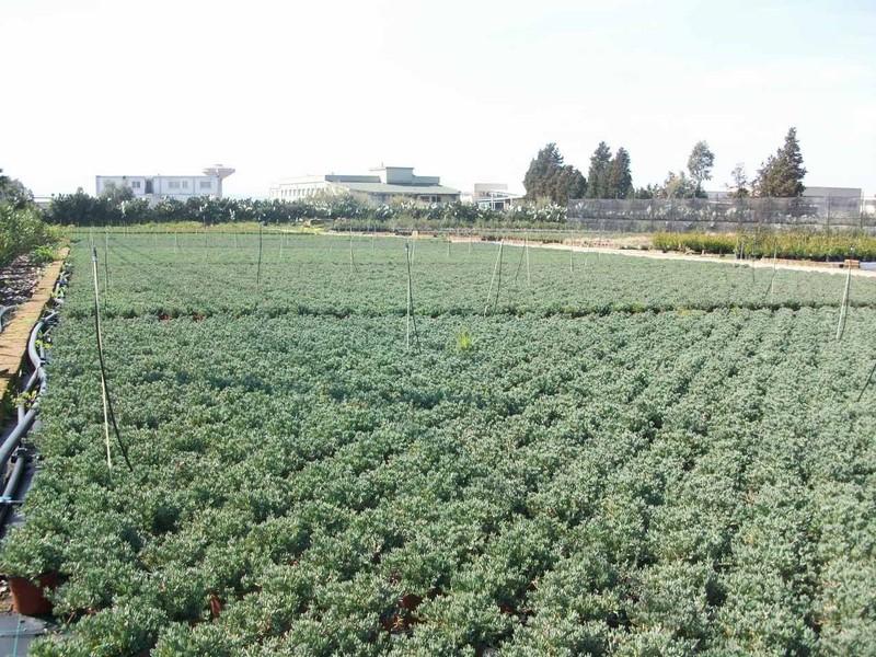Vivai teflor vivai piante articoli da giardino al for Piante da frutto nord italia